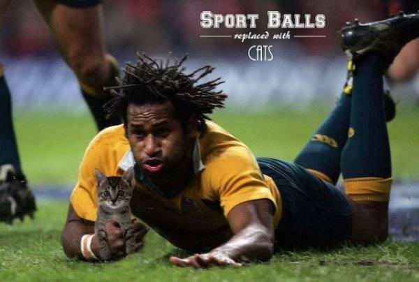 Смешные спортивные фото: замени мячи котами